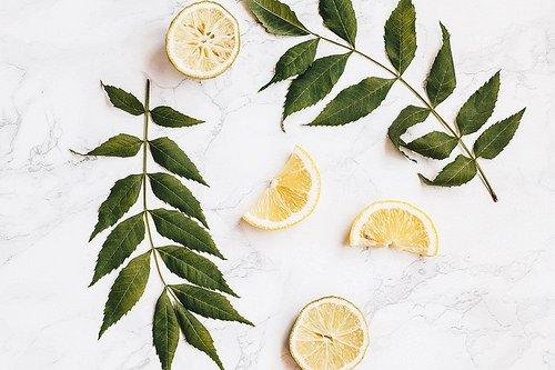 Mint leaves and lemon slices